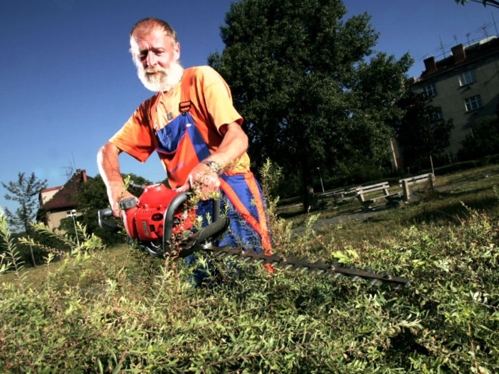 Maintenance of hedges and shrubs in public greenery
