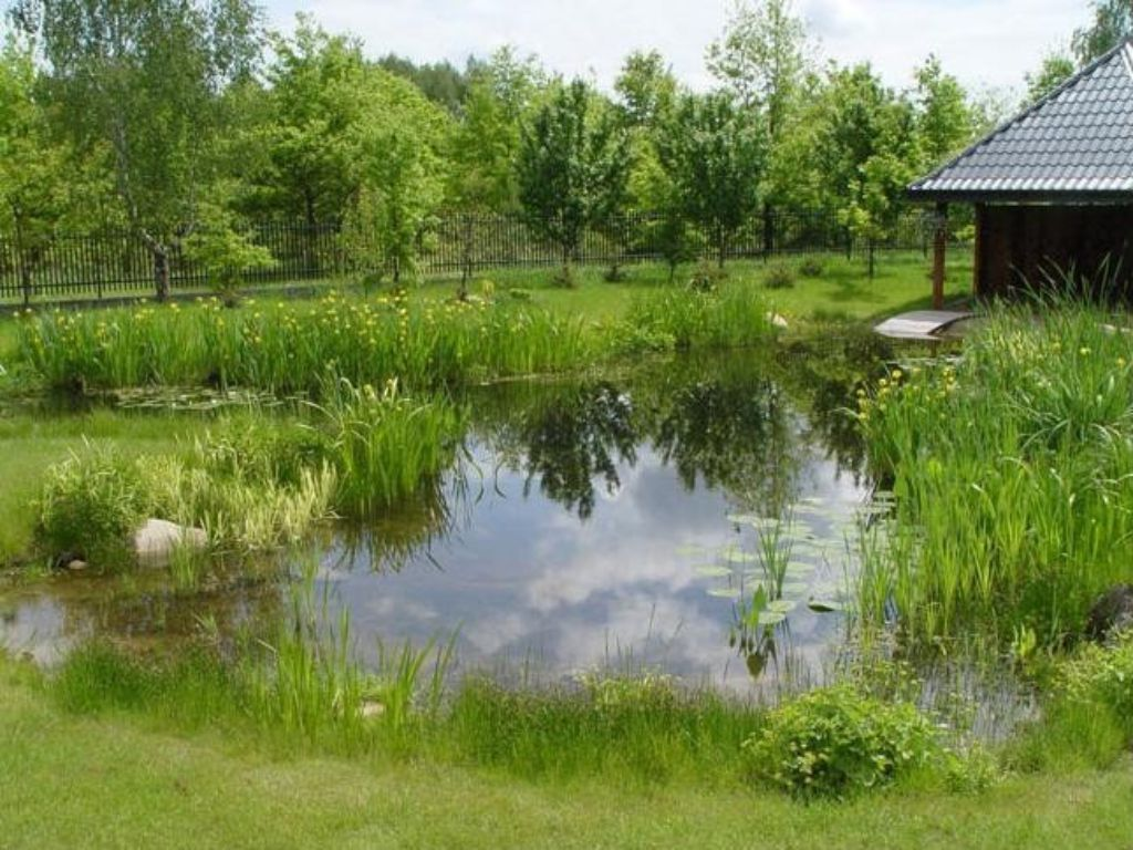 Pond natural style