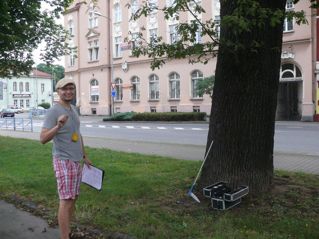 Tree stability check and biological root assessment