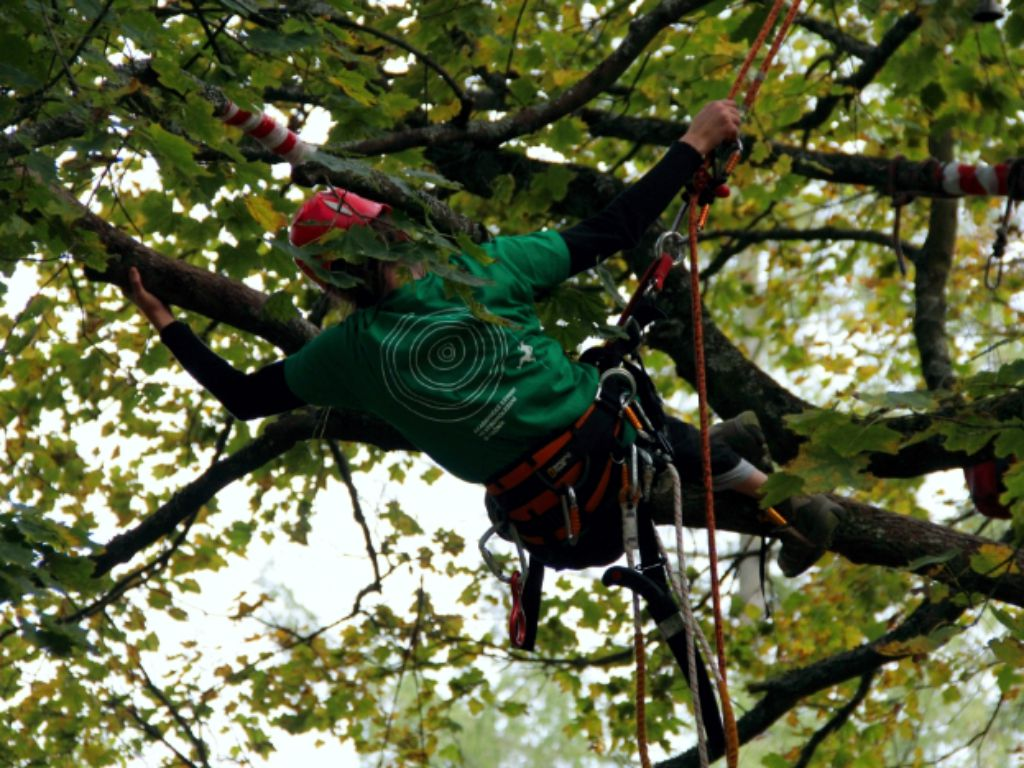 Treatment of the tree and its gradual lightening of damaged branches