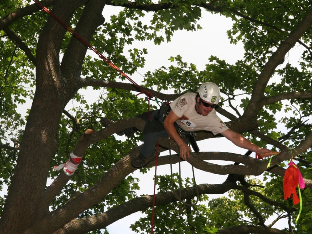 Optimal securing of the arborist in the tree crown