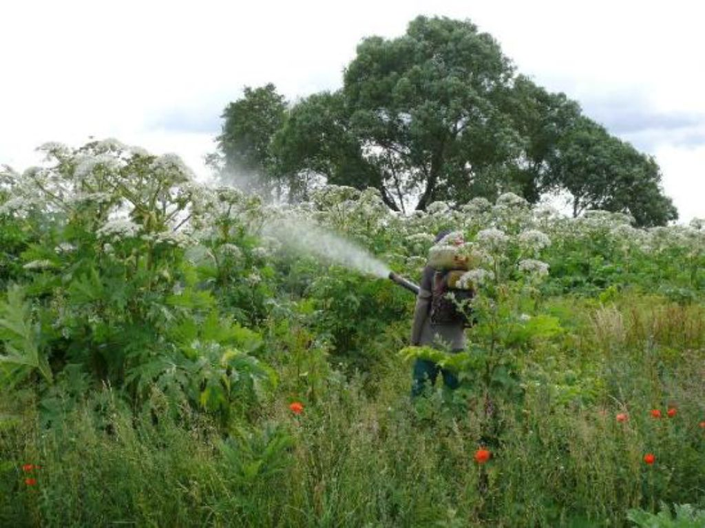 Professional spraying with herbicide