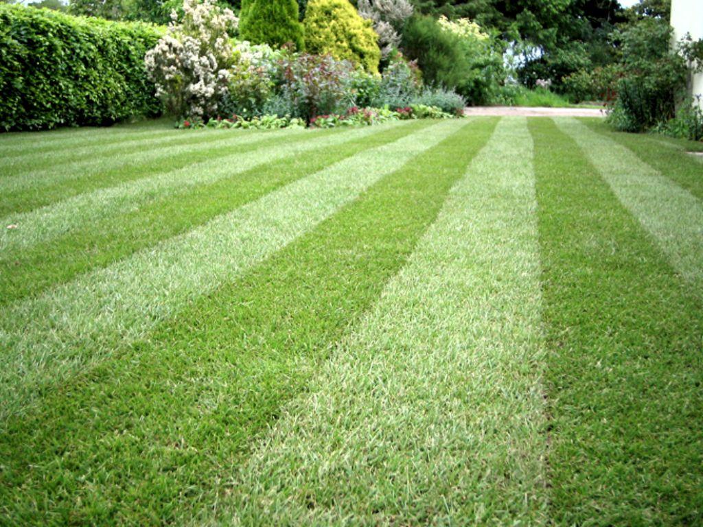 Mowing, fertilizing, verticutting your lawn