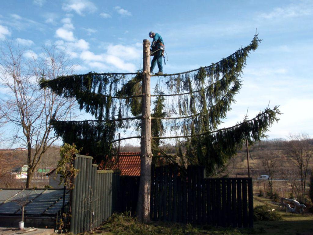 Using arborists and climbing equipment