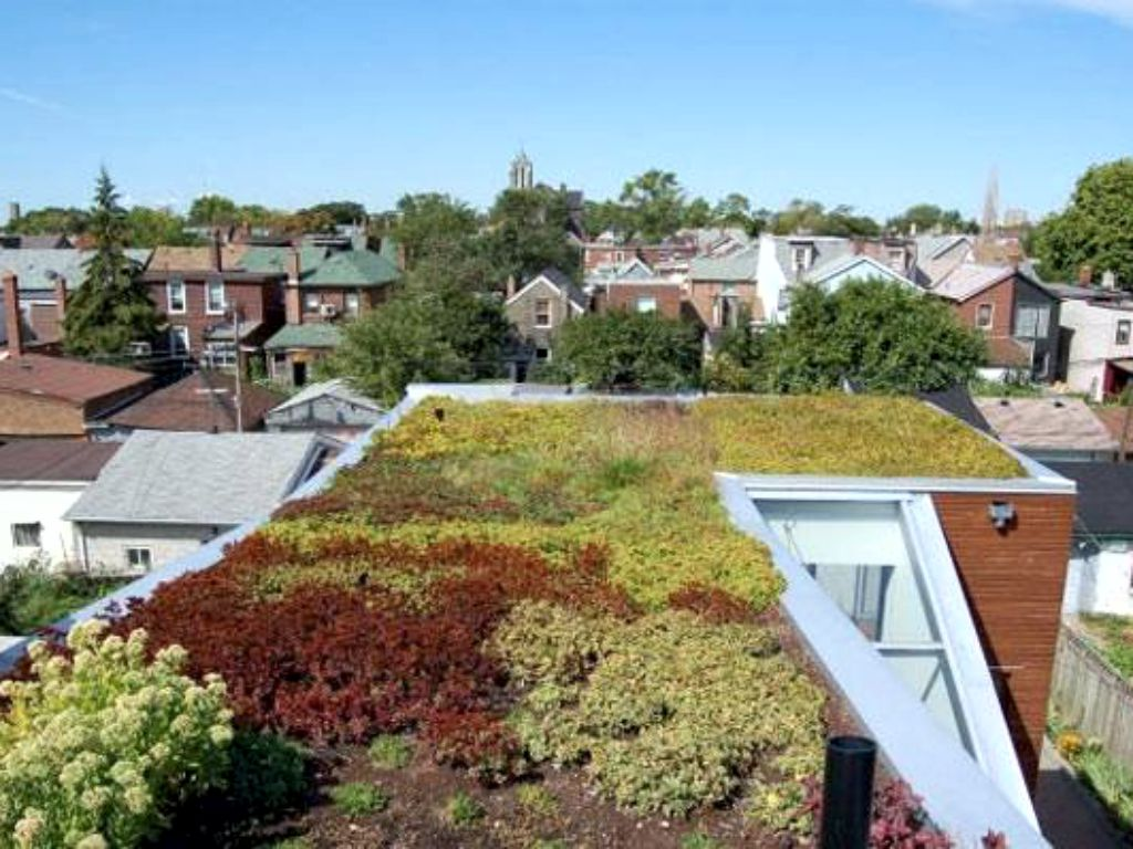 Maintenance-free roof garden with stonecrops
