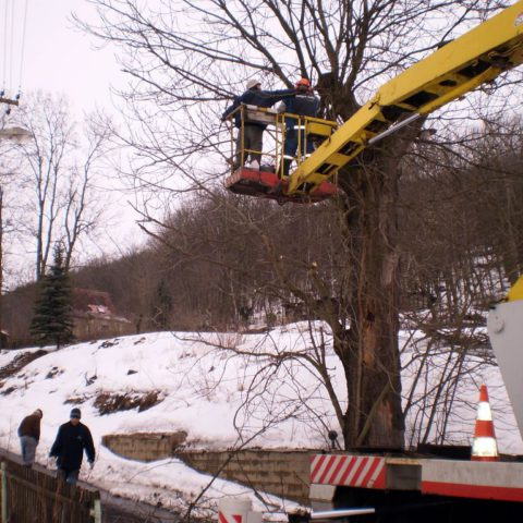 Removing a tree from a platform