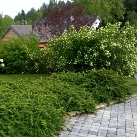 Nature garden at Orlická dam in Trhovky