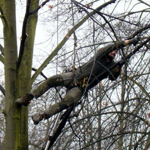 Safety and educational pruning of trees in the park